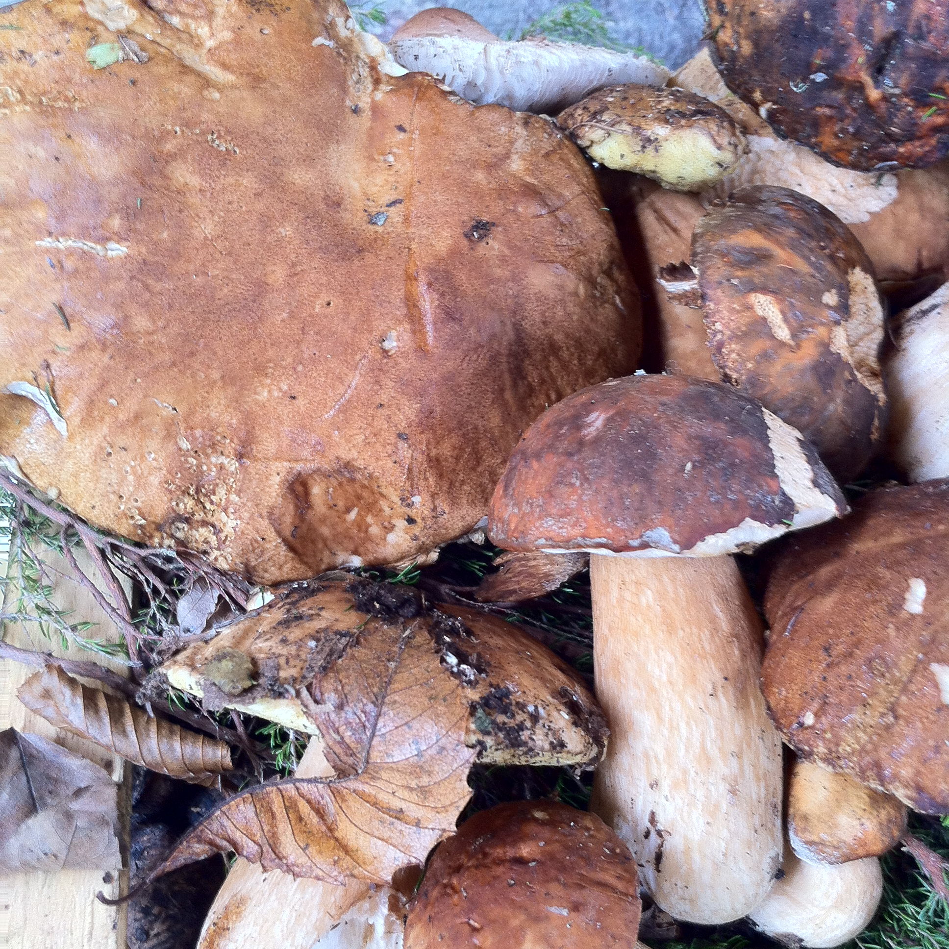 funghi-appena-colti-3.JPG