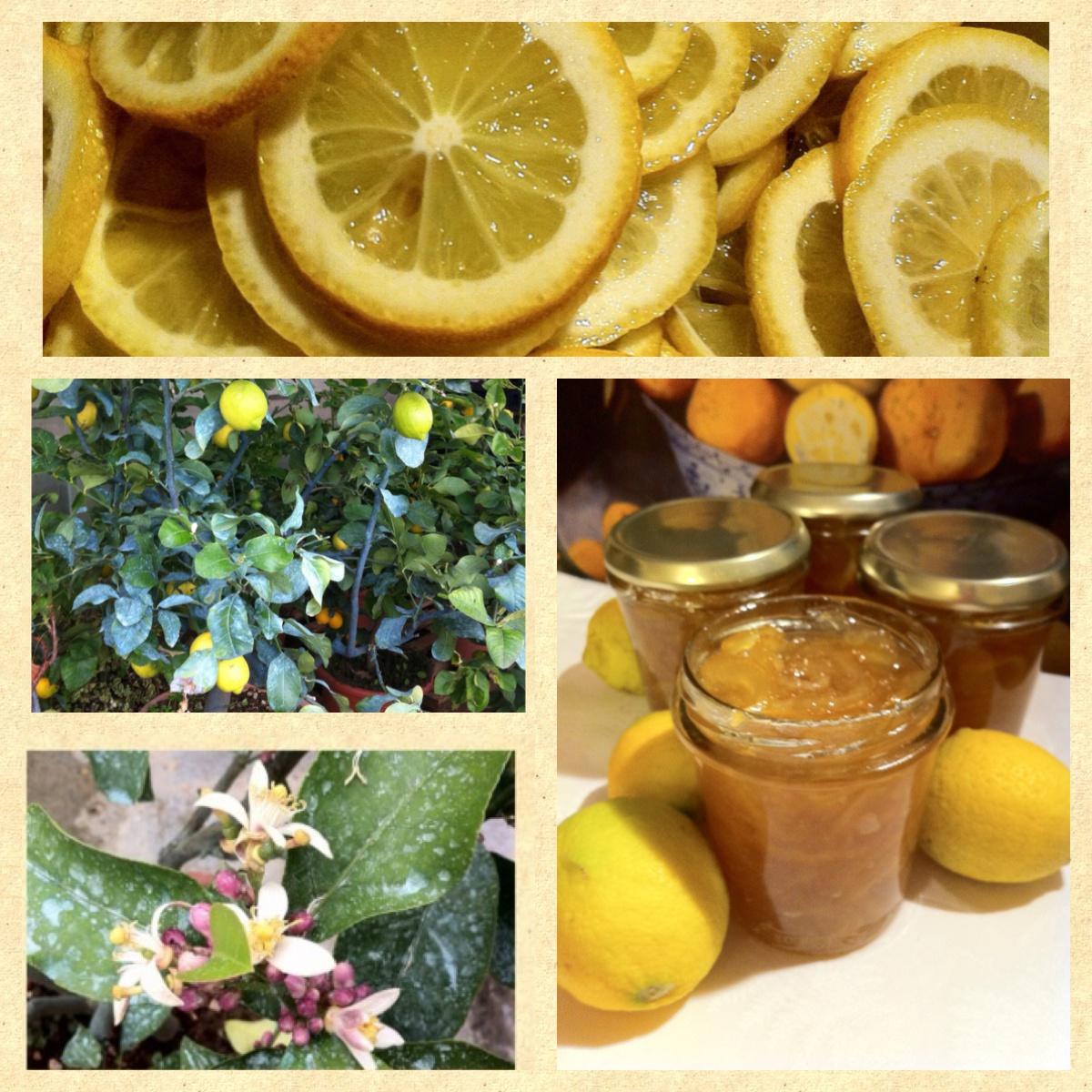 marmellata-di-limoni-a-fette-5.JPG