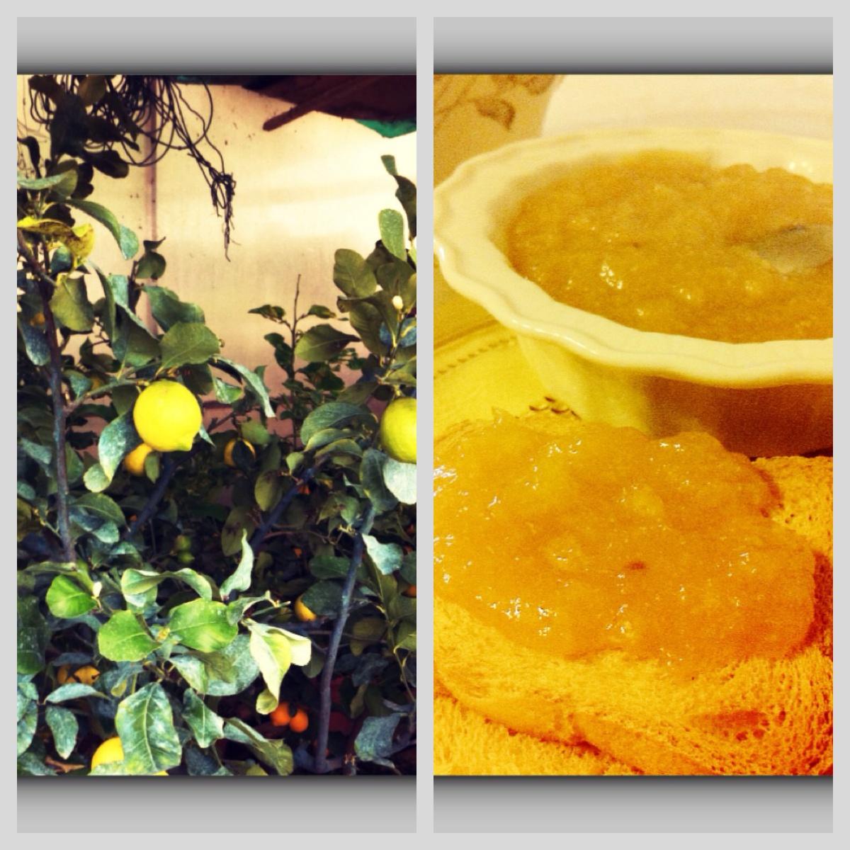marmellata-di-limoni-passata-9.JPG